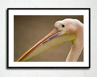 Pelican photography