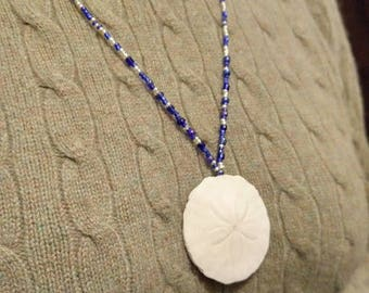 Blue and White Sand Dollar Pendant, Real Sand Dollar