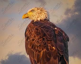 Sunrise Bald Eagle
