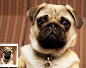 Custom Pet Portraits, Custom Dog Portraits, Oil Painting, Custom cat Portrait, Painting from Photo, Pet Oil Paints, Dog & Cat Oil Paintings