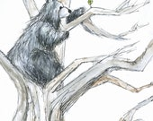 Reaching High Bear Greeting Illustration Art Card - blank inside- by Catherine Redgate