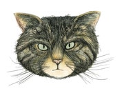 WILDCAT card - illustration illustrated Greeting Card - blank inside- by Catherine Redgate - mountain - forest - animal - Scottish cat wild
