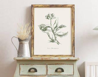 Ivy Berries Vintage Botanical Print
