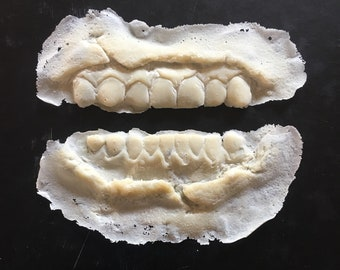 ZOMBIE ROTTED TEETH ROTTING DENTURES WALKING DEAD HALLOWEEN COSTUME ACCESSORY