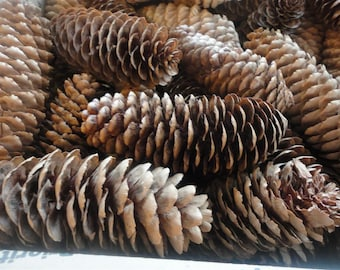 Pine Cone Lot, Real Pinecones,  Wedding Decor, Natural Pinecone, All Natural, Nature Decor, Nature Crafts, Decorative Pinecones,