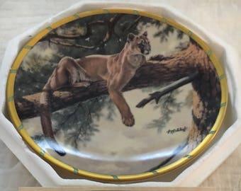 Rocky Mountain Puma