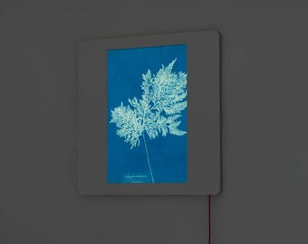 DADA Light Diapo - Anna Atkins - Cyanotype