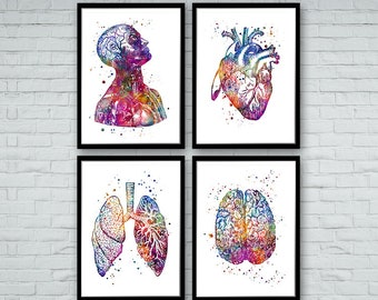 Art drawing office Building Anatomy Art Deals Set Of Prints Human Heart Brain Lungs Watercolor Wall Art For Doctor Office Decor Etsy Anatomy Art Etsy