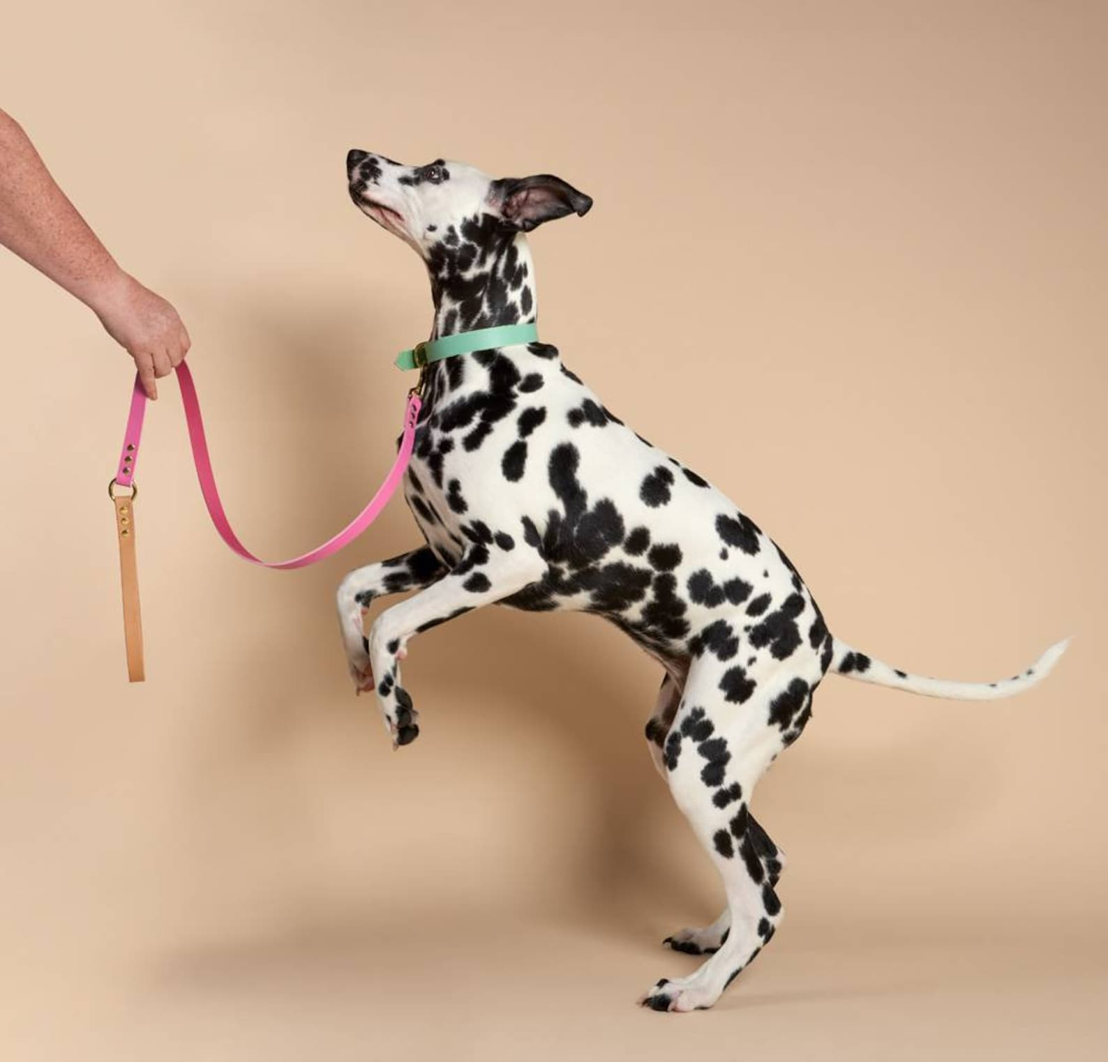 Colourful leather dog leash