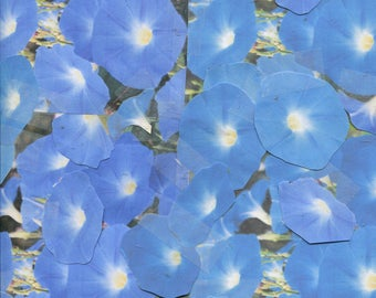 100-Heavenly Blue - morning glory seeds...light sky blue color...for spring 2018 planting...check out free seeds ...