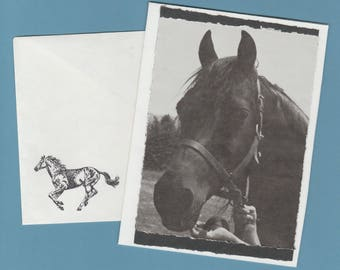 Morgan Horse Handmade Blank Greeting Card Matching Envelope