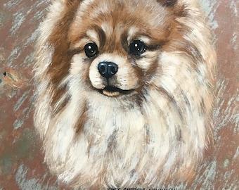Pomeranian (Fawn)