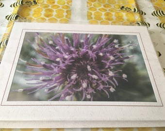 Greeting Card Set - 5pk Flowers #3