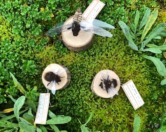 Bumble bee or Broad bodied chaser dragonfly OOAK Needle felted sculpture - handmade with plant dyed, local wool. eco friendly, insect art