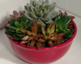 Succulent Arrangement in a bowl