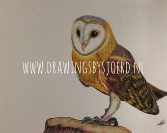 Owl Original Drawing