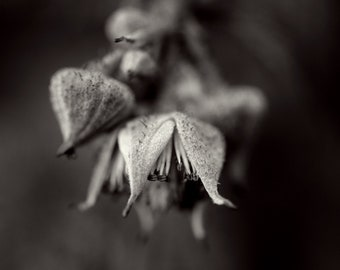 Fine Art Photography   Limited Edition Print   Photo Art   Black & White Photography   Giclée Print   Nature Photography   Original Photo