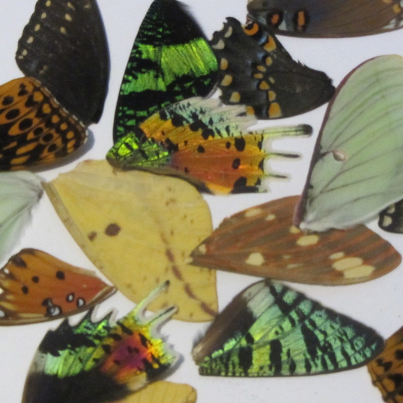 10 pieces- Real Mix of butterfly wings blue moth wings wholesale lot mix rainbow wings, yellow orange pink green real