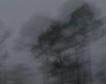 Ghost Trees B&W - Photo Paper Print