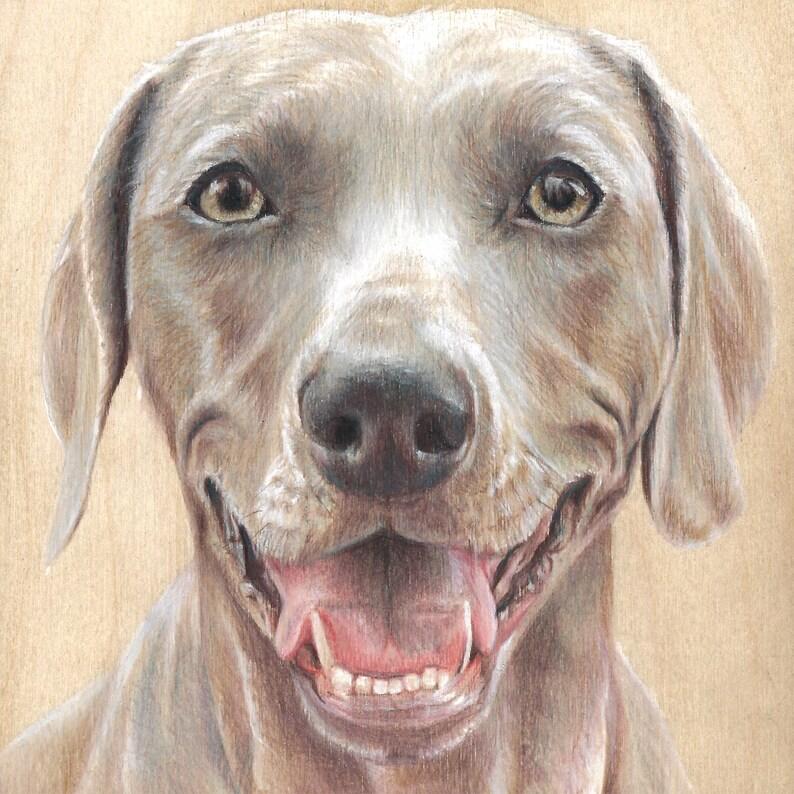 weimaraner / dog art / custom pet portrait
