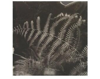 Fern, Photographic Print, Fine Art Giclée, Limited Edition.