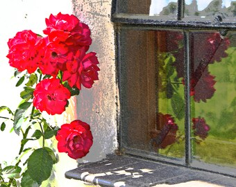 Roses at the window