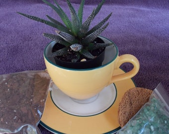 Do-It-Yourself Tea Cup Planter Kit
