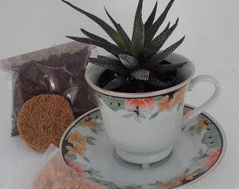 Do-It-Yourself Tea Cup Succulent Kit