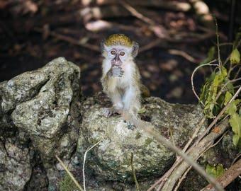 Barbados Wildlife 1