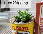 Small El Pato tin can Spanish planters decorations for wedding, babyshower, hot sauce planters Mexican theme succulents, fiesta event cactus
