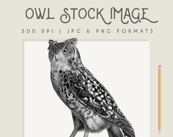 Clipart Owl instant download, commercial use, owl clip art, owl printable, digital download, halloween clipart, vintage print