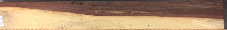 Horloge de coquille de tamarin spalted