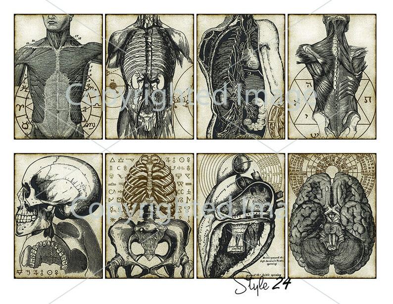 8 Anatomy ATC vintage printable Esoteric craft art paper Human Body  crafting scrapbook embellishment instant download digital collage sheet