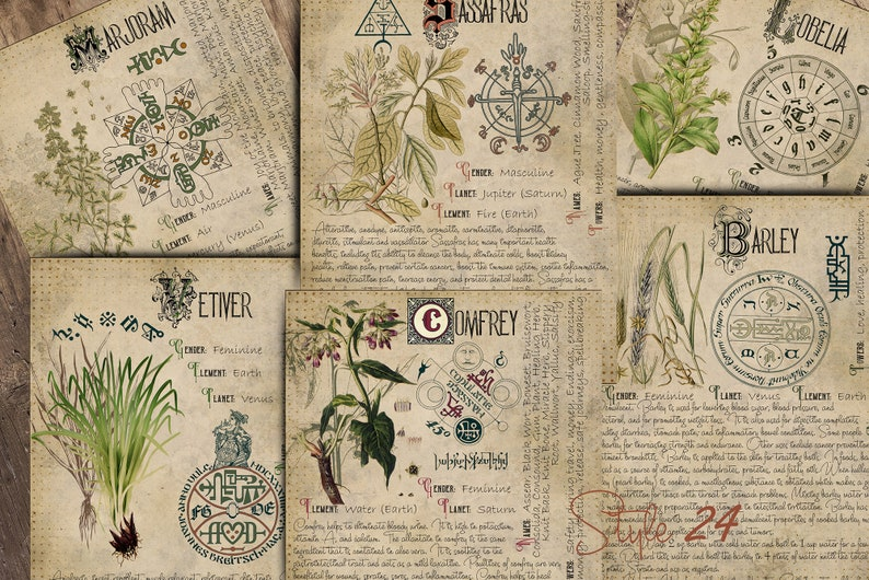 photo about Printable Book of Shadows referred to as Witchcraft Grimoire Organic Web pages, Printable E-book of Shadows, BOS, Electronic Obtain of Crops, Spell Component, Environmentally friendly Witch, Herbarium 20