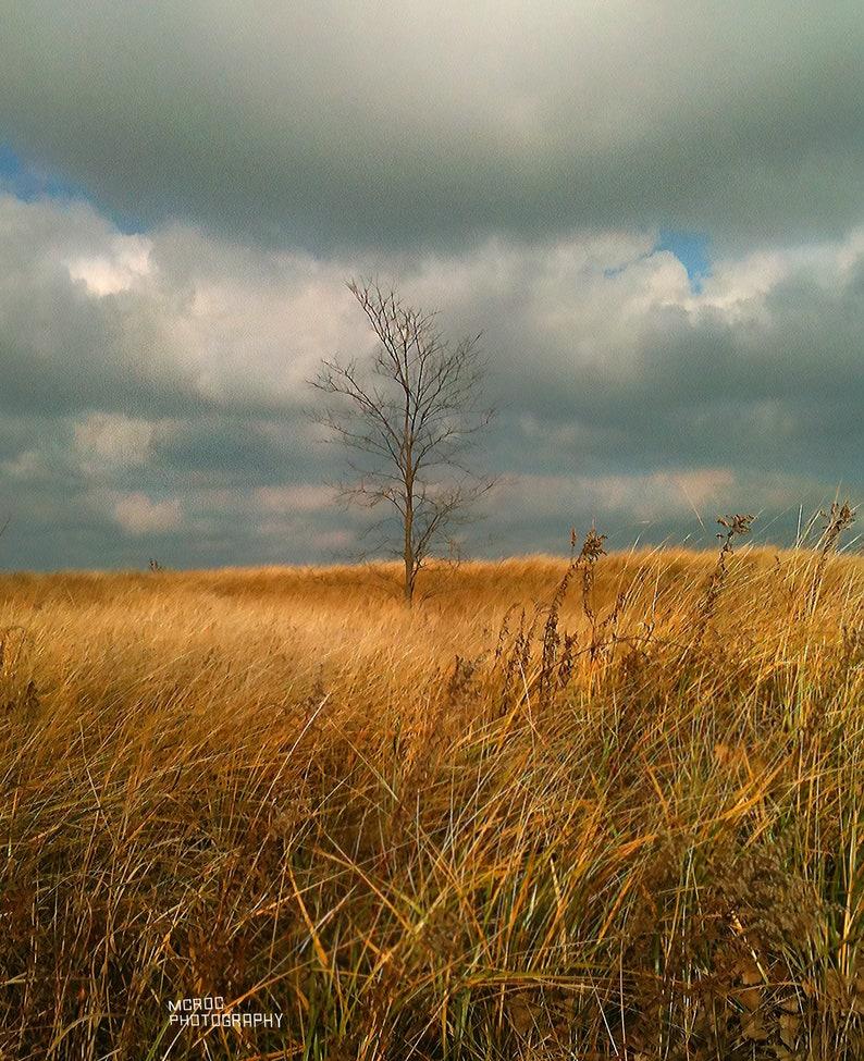 Love coeur arbre paysage toile art imprimé boîte encadrée photo 43