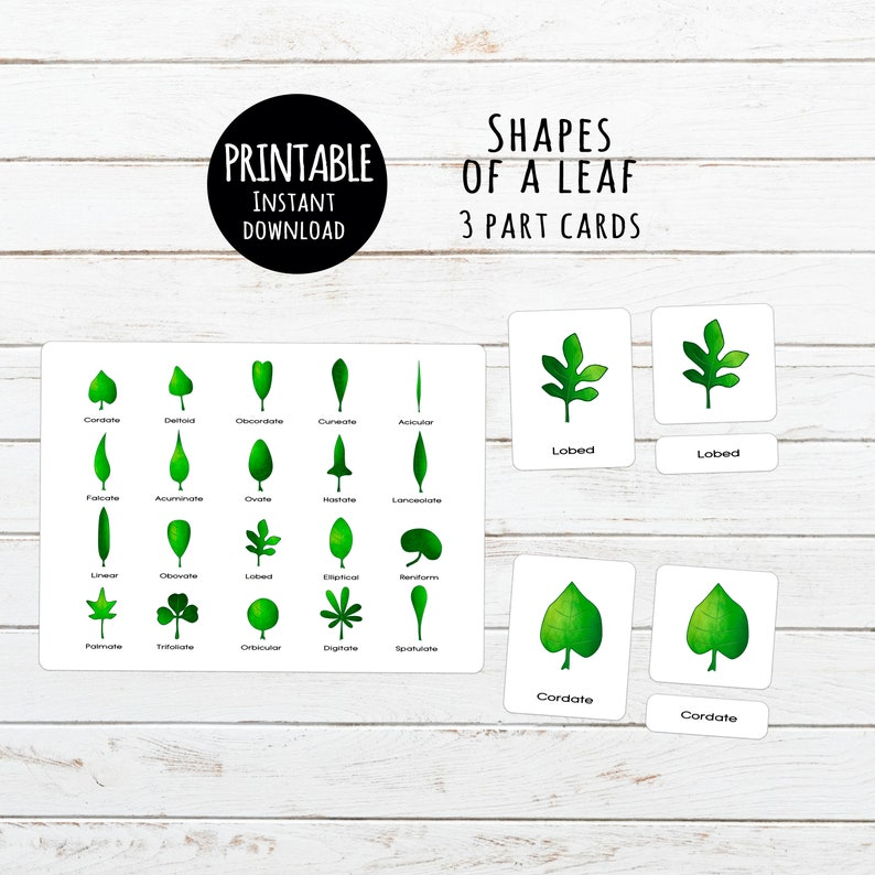 graphic about Leaf Shapes Printable referred to as Leaf styles Printable 3 section Montessori playing cards Electronic down load