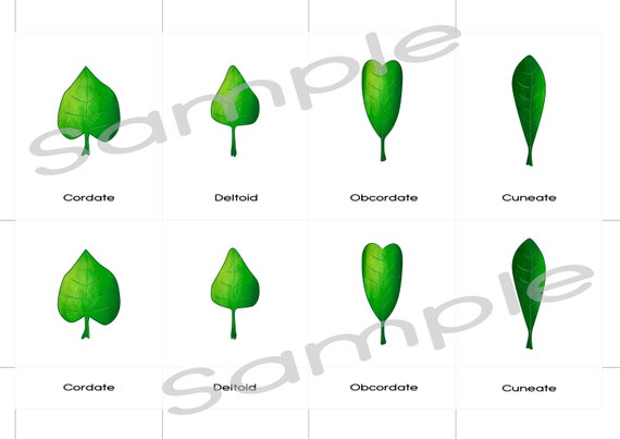 image regarding Leaf Shapes Printable identified as Leaf styles Printable 3 element Montessori playing cards, Electronic obtain, waldorf character desk, kindergarten