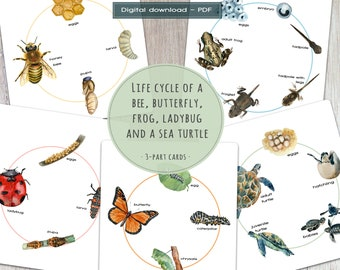 Life cycle of animals BUNDLE, printable 3-part cards, Montessori materials, zoology activity, homeschool