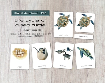 Life cycle of a sea turtle, 3-part cards, Montessori materials, printables, zoology activity, homeschool