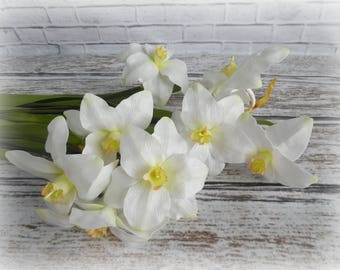 daffodils, tender flowers, flowers for the house, daffodils in the house, daffodils white, daffodils yellow, spring flowers