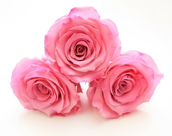 Preserved Deep Pink Roses that last a year Box of 6 rose heads.