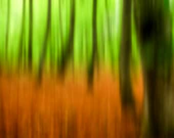 Blurry colorfull beechforest