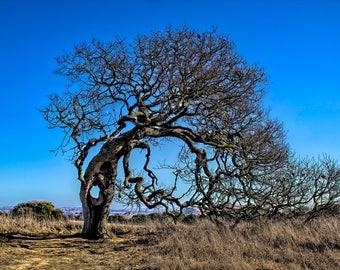 Tree at Helen Putnam Park