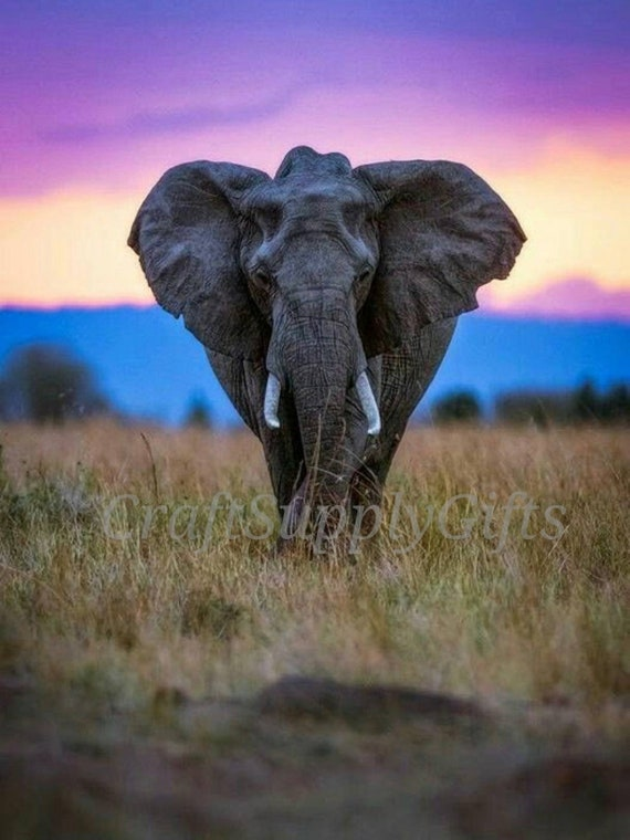 5D DIY Diamond painting Sunset Elephant Mosaic Cross Stitch Full Square  Drill 3D Diamond Painting kit Home Sticker Decoration Gifts