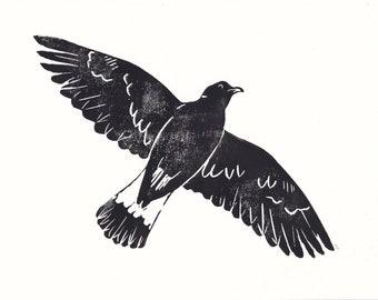 Original Print of a Eurasian Collared Dove