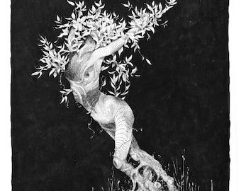 Print of Daphne