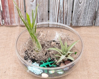 Forest air plant terrarium kit air plant air plant kit diy diy terrarium kit terrarium kit do it yourself kit do it yourself solutioingenieria Image collections