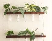 Hanging propagation station 10 vial flower vase decor