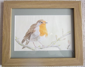 Robin Red Breast - A framed original watercolour by Gwen Blyth