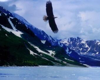 Alaskan Eagle Print